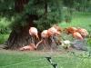 Wochendfahrt 2011 Zootiere